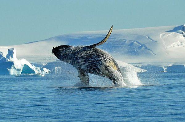 svalbard-scialpinismo-barca-15